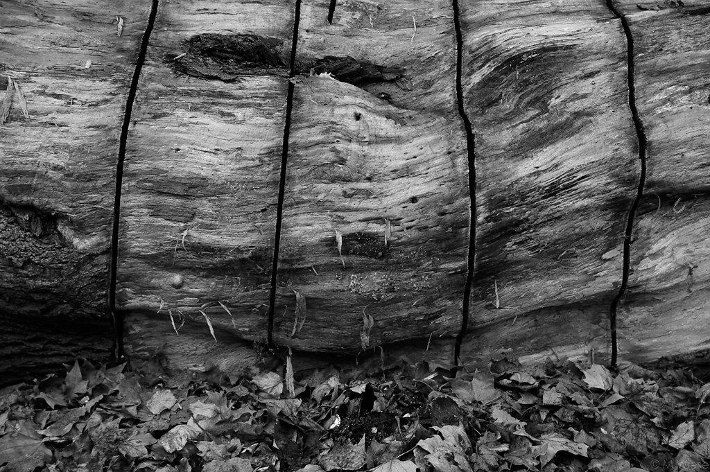 101002-marc-wiese-DSC5332b-2010-Landschaftsfotografie-Abstrakt-Struktur-Blumen-Pflanzen-Fotokurs-Hannover-Landschaft.jpg