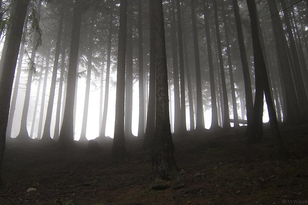 131012-marc-wiese-IMG-7146-Harz-Landschaft.jpg